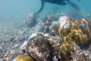 Mass Coral Spawning: Restoring damaged coral reefs